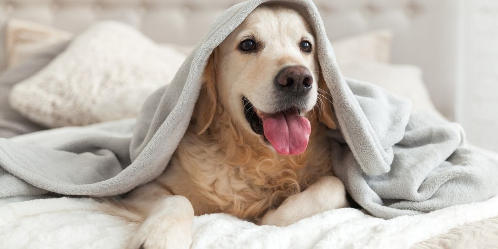 You love your furry members of the family, but you feel like you have to sacrifice your sense of style in your home decor because of them. You need pet friendly interiors that can withstand the wear and tear of your pets, and still leave your home looking great, here are some tips.